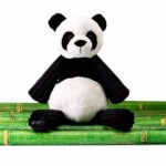 Meet Shu Shu the Panda